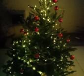 本物の「モミの木」