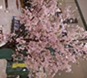 ★春の風物詩★