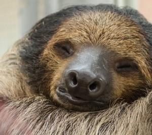 sloth-3753478_960_720